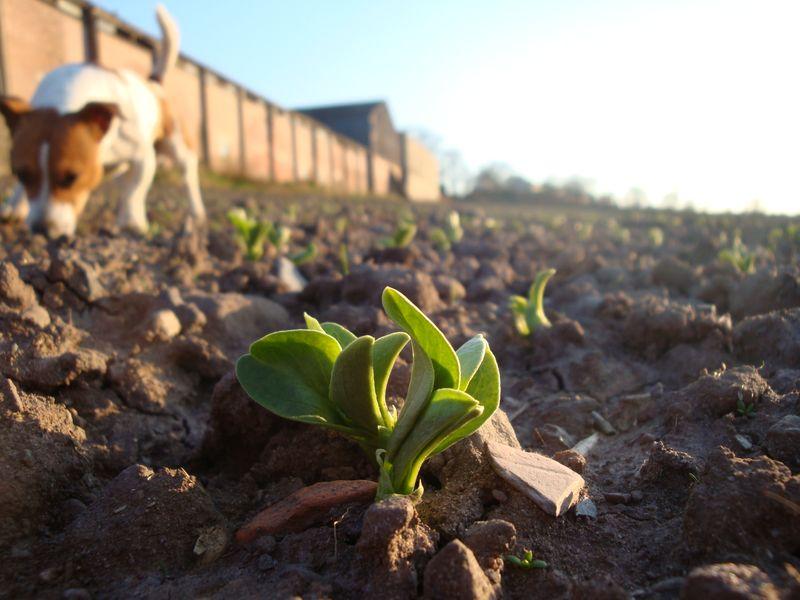 Spring has sprung 09 218