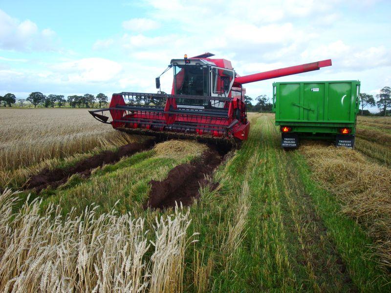 Harvest 017